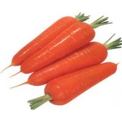 大量采购胡萝卜