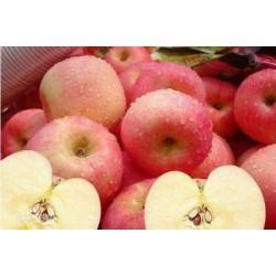 收购优质苹果