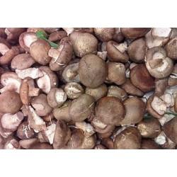 求购菌菇类