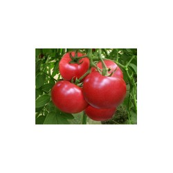 求购西红柿等蔬菜