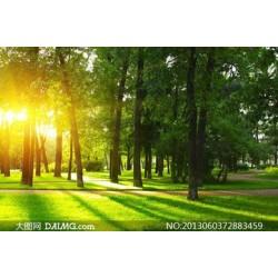 求购风景树木
