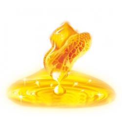 求购香油、花生油、玉米油、菜籽油
