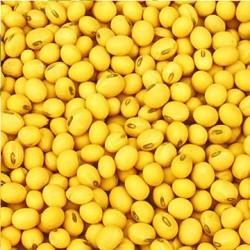 大量收购大豆