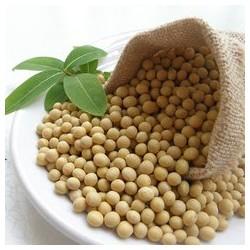 常年大量收购大豆,黑龙江收购大豆,山东收购大豆,河南收购大豆