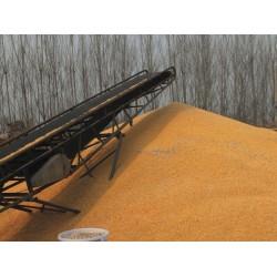 现款求购稻谷玉米高粱荞麦小麦黄豆菜籽等饲料原料