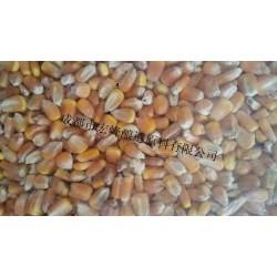 求购高粱大米玉米小麦豆薯类原料