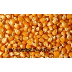 求购糯米高粱淀粉豆类玉米大米碎米小麦等原料