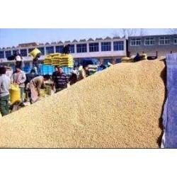 诚心收购玉米大豆高粱碎米等农副产品价格面议