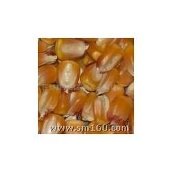 成都华粮采购玉米 小麦 碎米 高粱 进口大米 木薯淀粉