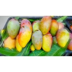 求购芒果. 猕猴桃、柿饼. 蜜桔、脐橙、柚子、柠檬.  苹果