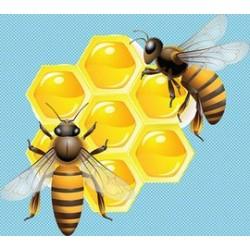 求购蜂蜜,蜂王浆.蜂巢.蜂花粉