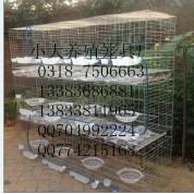 卖兔子笼 鸽子笼 鹌鹑笼 宠物笼 运输笼 鹧鸪笼 猫笼 狗笼